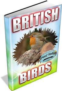 BRITISH-BIRDS-74-VINTAGE-BOOKS-ON-DVD-birdwatching-twitching-ornithology