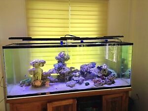DSunY Accessories for Marine Coral LPS SPS Saltwater Fish Led Aquarium Lamp Tank