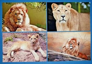 Set-of-4-NEW-Animal-Wildlife-Postcards-Lions-Lioness-Cub-49L