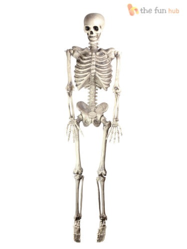 Halloween Présentoir Humain Squelette 150 cm vie pleine taille Parti Prop Décoration