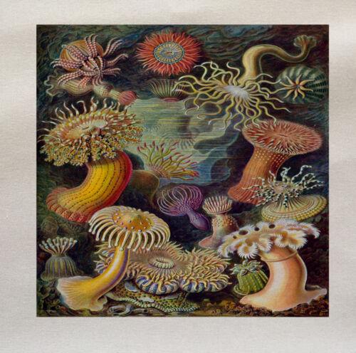 Bajo el mar Impreso Panel de tela de hacer un cojín tapizado de CRAFT