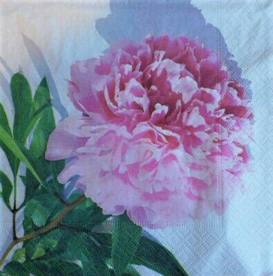 Peonía Para Decoupage Y Manualidades 4 X Solo Papel Servilletas Flores 35