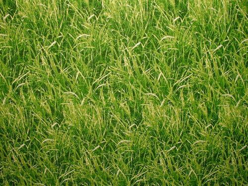 Green Grass tejido de algodón-Cortina Persianas Craft Quilting Patchwork tapicería