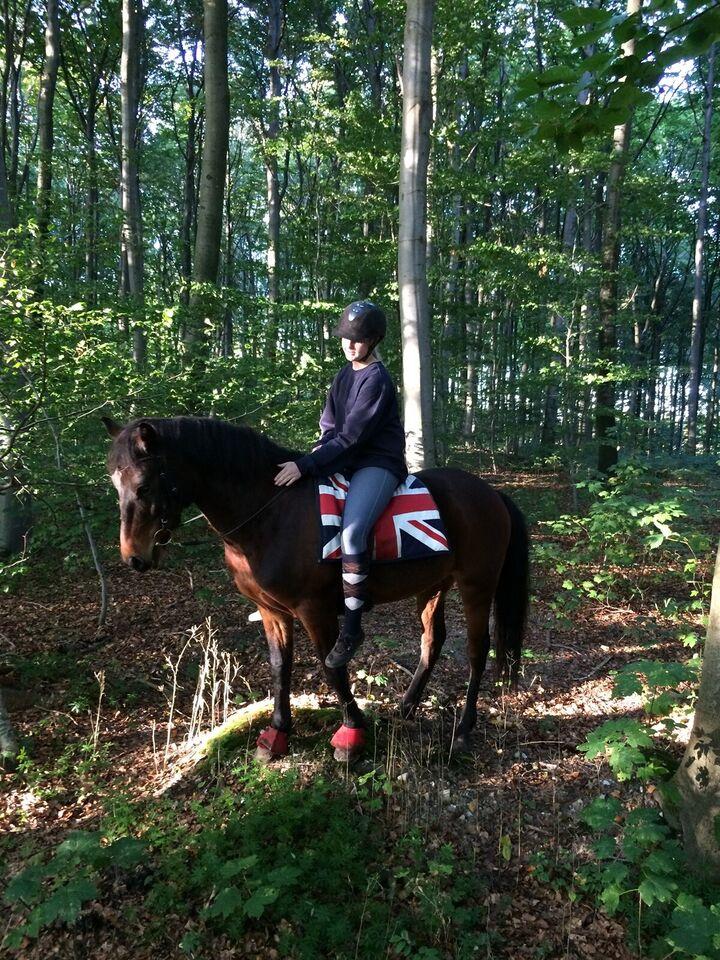 Anden race, vallak, 12 år