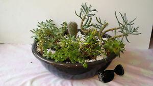 cactus-miniature-garden