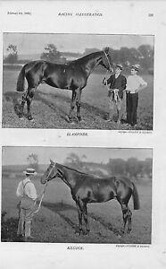 1896 Illustration Du De Course Illustrated. Chevaux: Blairefinde & Kilcock Pour AméLiorer La Circulation Sanguine