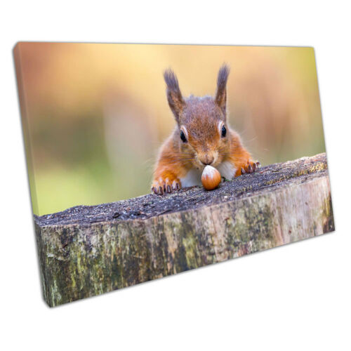 wildlife Animal Red Squirrel can/'t believe his luck Nut Ready to Hang X1189