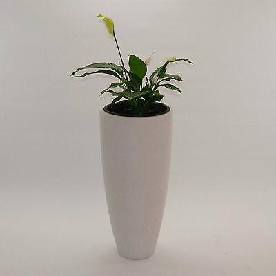 Blumenkübel Pflanzkübel Übertopf Fiberglas rund konisch D30xH60cm perlmutt weiß.
