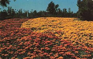 Postcard-Los-Angeles-Arboretum-Arcadia-California
