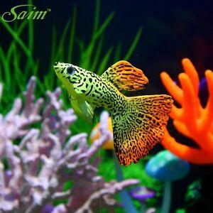 aquarium artificial guppies fake fish float simuliated for fish tank