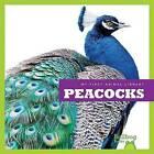 Peacocks by Cari Meister (Hardback, 2015)