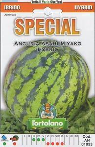 ANGURIA-ASAHI-MIYAKO-HYBRID-SEMI-SPECIAL-IBRIDO