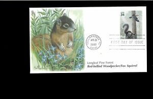 2002-FDC-Longleaf-Pine-Forest-3611c-Woodpecker-Squirrel-Tallahassee-FL