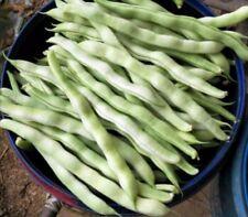 Oriental Pig Ear Green Bean Seeds 中国扁豆,眉豆,猪耳朵豆角种子 1 bag of 30