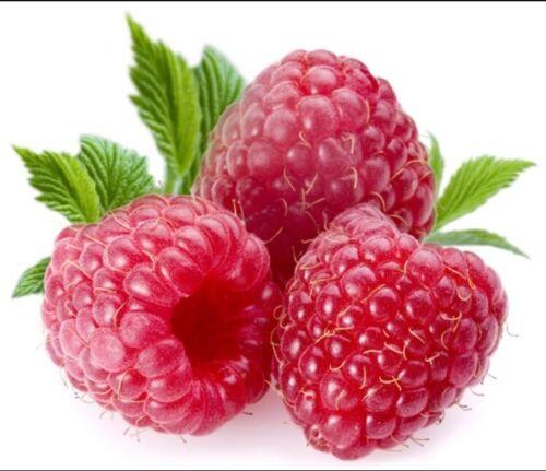 Giant Sweet Tulameen Framboise 100 Graines Médicinales Antioxydant Fibre