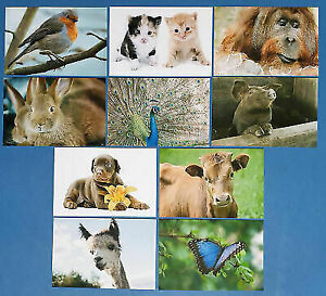 Set-of-10-NEW-Animal-Postcards-great-for-Postcrossing-amp-Postcardsofkindness