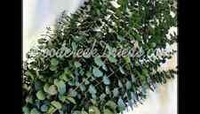 DRIED FLOWER PRESERVED GLAZED WASHED GREEN JADE EUCALYPTUS FRAGRANT FLOWER STEM