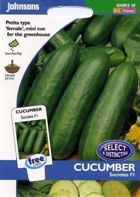 Unwins pacchetto pittorico-vegetale-zucchina verde lungo Bush 10 Semi