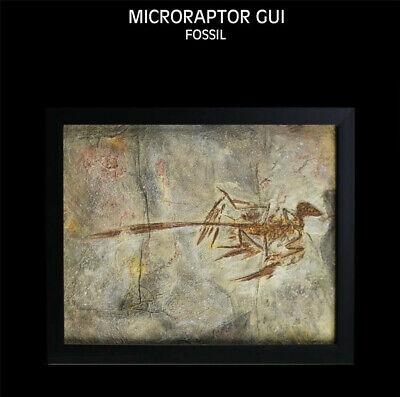 Zhenyuanlong Suni Fossil Dinosaur Model Collector Home Decor Photo Frame Gift