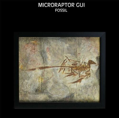 Microraptor Gui Fossil Dinosaur Model Collector Home Decor Photo Frame Gift Toys