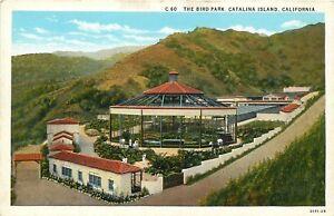 White-Border-Postcard-CA-D512-The-Bird-Park-Catalina-Island-California-ca1920s