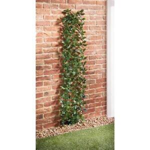 G19 étendre Laurel Leaf Trellis Parfait Pour Couvrir Les Murs Et Clôtures 180 X 30 Cm-afficher Le Titre D'origine