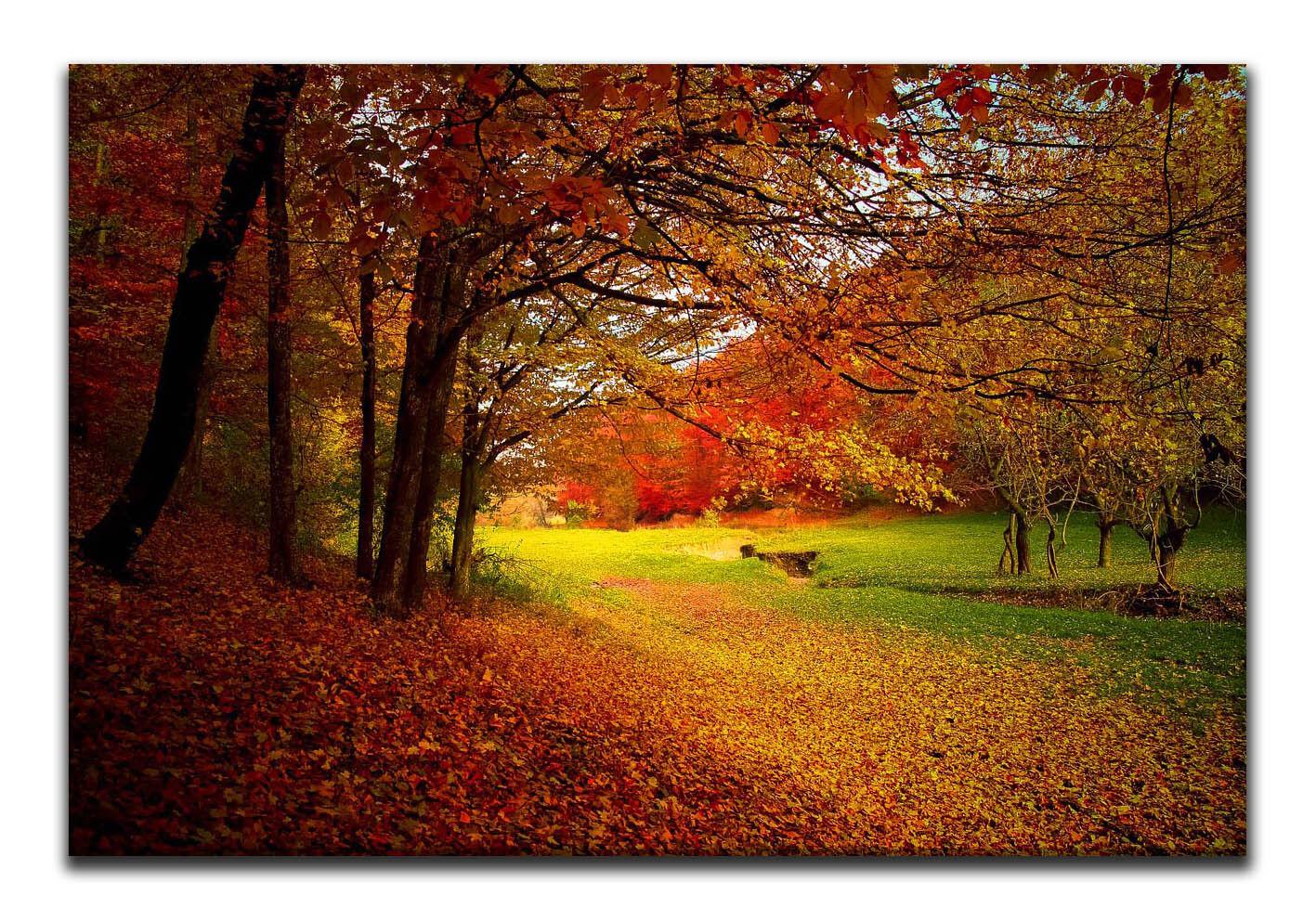 Leinwand Bild Wandbild Keilrahmenbild Herbst  Bäume Natur Wald Landschaft