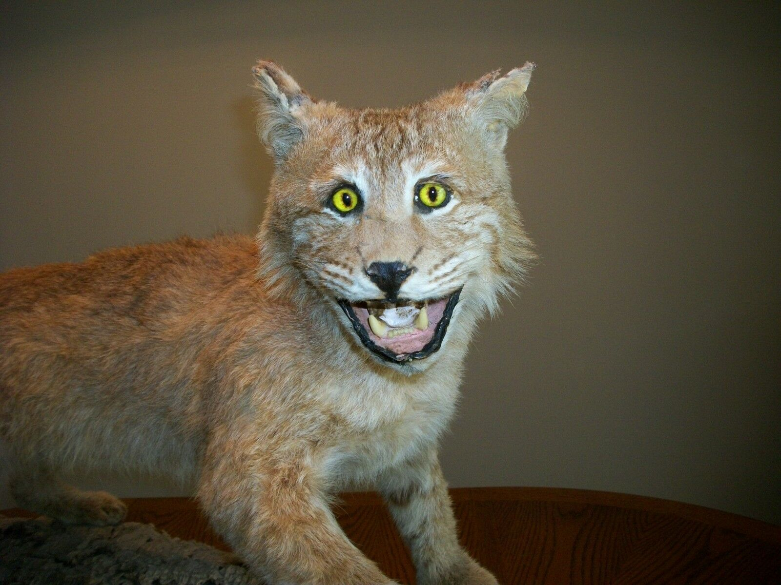 how much to get a bobcat mounted