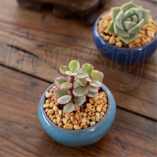Ice-Crack Glaze Flower Ceramics Succulent Plant Mini Pot Garden Flowerpot Decor