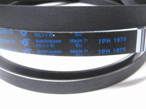 Electrolux Rex AEG Cinghia asciugatrice 7PH 1975 EDC EDE EDI FTB LTH PTE RDC ZDC