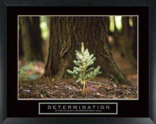 wallsthatspeak Determination Little Pine Framed Motivational Poster 22x28