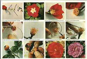 Document-vintage-issu-de-magazine-annee-70-80-triptyque-fleurs