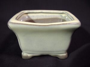 Image Is Loading Anese Misho Seedling Mame Bonsai Pot White Chocolate