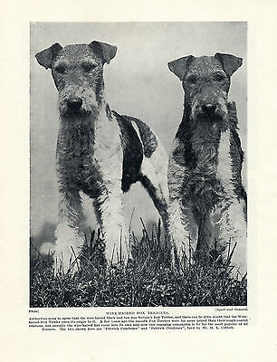 WIRE FOX TERRIER TWO NAMED DOGS OLD DOG PRINT FROM 1934