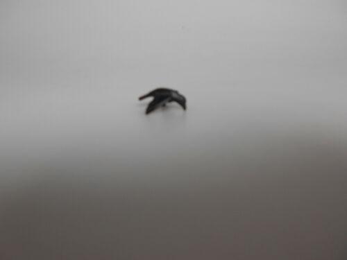 Lego® 1x Vogel Crow Raabe Krähe schwarz  Neu