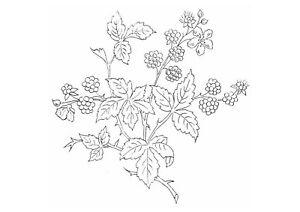 Vintage-Visage-iron-on-embroidery-transfer-Victoriana-series-blackberry-bramble
