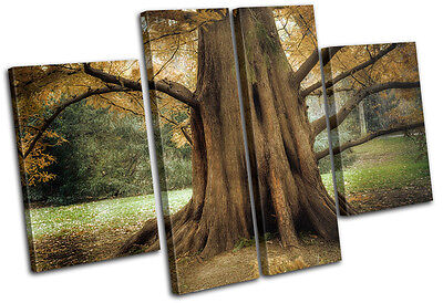 Ancient Old Tree Landscapes MULTI CANVAS WALL ART Picture Print VA