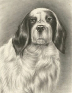 20th Century Charcoal Drawing - Portrait of a Dog