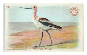 American Avocet, Arm & Hammer Game Bird Series Victorian Trade Card *VT30A