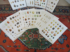 A-SET-OF-6-VINTAGE-DANISH-BOTANICAL-CHARTS-OF-SEEDS-PRINTED-IN-1948