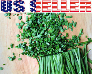 200-ORGANICALLY-GROWN-Chives-Seeds-Heirloom-NON-GMO-Mild-Onion-Flavor-Herb-USA