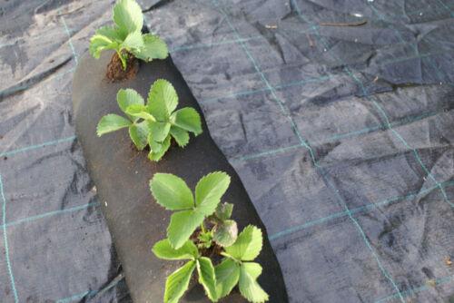 100m Pflanzschlauch für Beet Balkon Terasse oder Pflanzhilfe für den Garten
