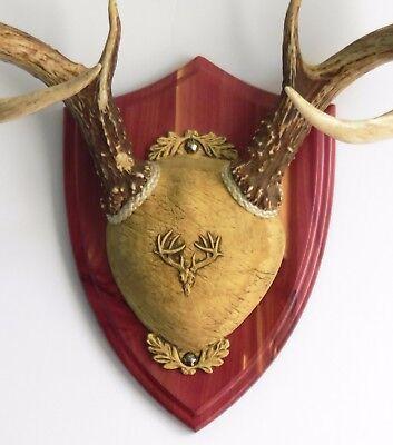 Cedar Ultimate Antler Mounting Kit for Deer - The ...