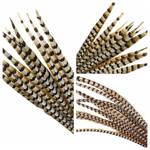 """Halloween//Millinery//Hats Natural REEVES PHEASANT Feathers 10-65/"""" Many Types"""