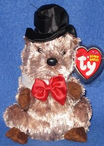 86ddc552763 TY PUNXSUTAWNEY PHIL 2008 GROUNDHOG BEANIE BABY - MINT TAGS - COC PA ...