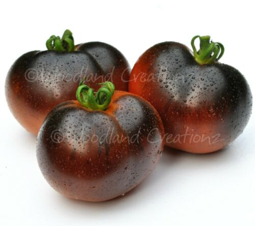 Chestnut Chocolate Tomato Seeds Sweet Rich Dark Brown Black Organic Heirloom USA