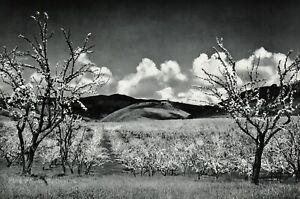 1950s-Vintage-ANSEL-ADAMS-Orchard-Santa-Clara-Landscape-Photo-Gravure-Art-11x14