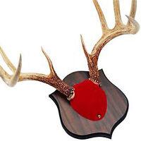 Quaker Boy Deer Horn Antler Mount Kit Red 80100