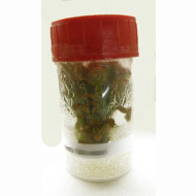 Sterile Tissue Culture Flask | Carnivorous plants | Cephalotus follicularis