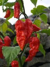 100 Premium Seeds From The 4 World's Hottest Peppers, 25 Seeds of Each One
